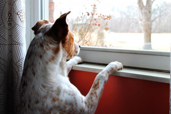 maneiras de entreter cachorro sozinho em casa