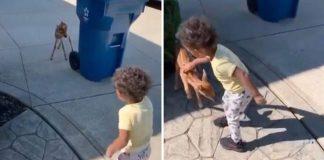 menino faz amizade filhote cervo na rua vídeo