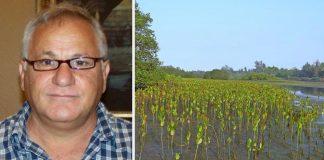 Homem planta 152 milhões de árvores refloresta manguezal Senegal