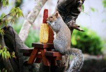 Homem constrói mesa para esquilo se alimentar