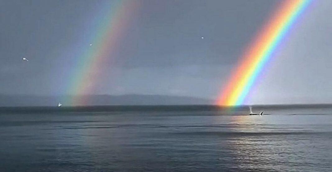 orcas nadam enseada arco-íris ao fundo