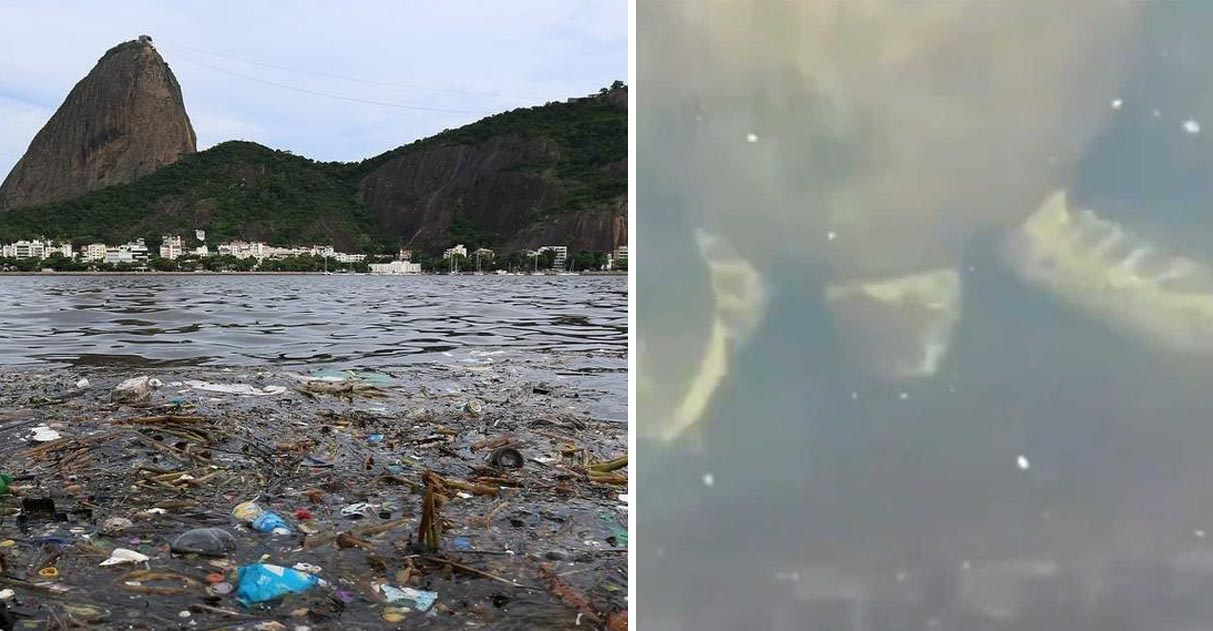 Tartarugas aparecem nadando em água cristalina da Baía de Guanabara no RJ 1