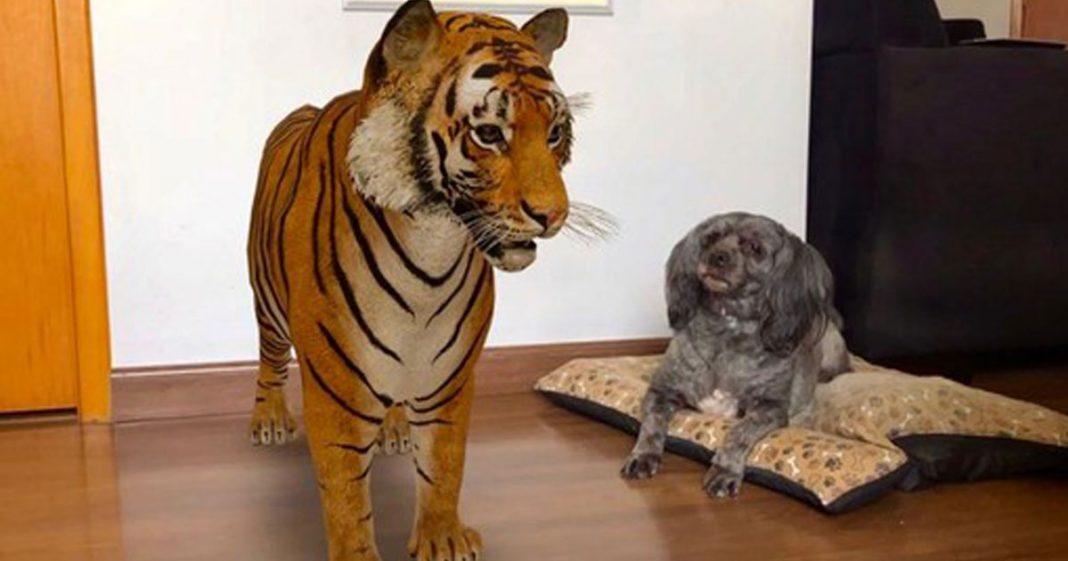 Google disponibiliza animais em 3D no chão da sua casa; saiba como encontrá-los 1