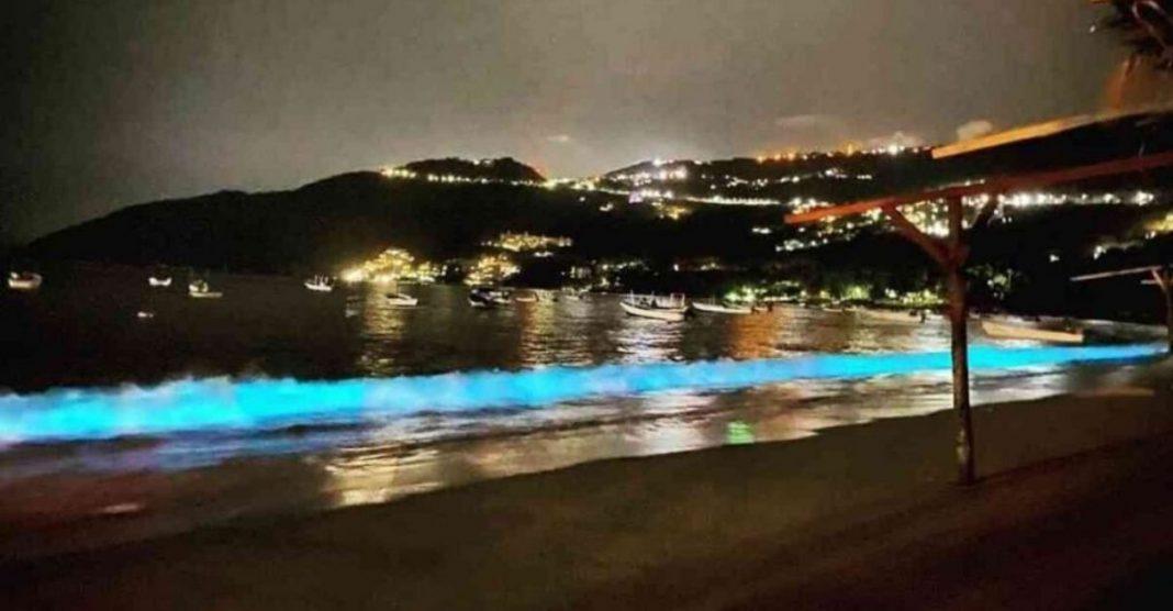 vida marinha ilumina praia acapulco méxico