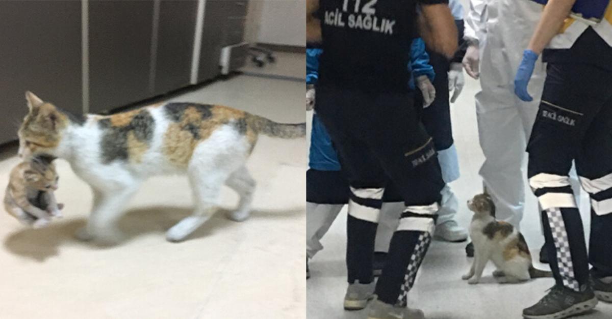 Gatinha leva filhote doente até emergência de hospital em busca de ajuda 2