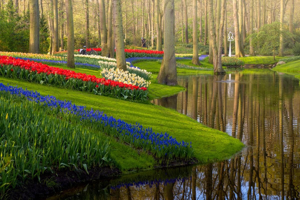 fotógrafo captura beleza jardins tulipas holanda