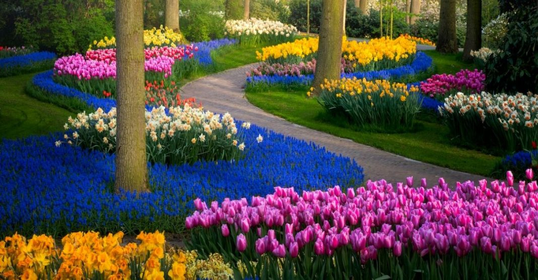 Fotos espetaculares do maior jardim de flores do mundo com 7 milhões de Tulipas! 1