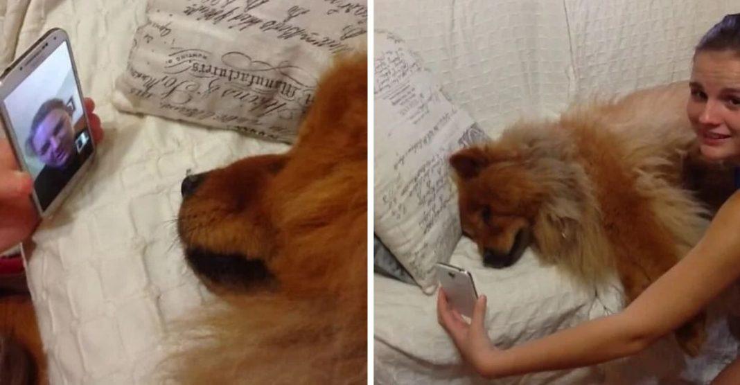 cachorra chora saudade videochamada dona mãe