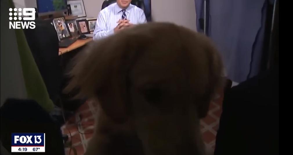 cãozinho interrompe previsão do tempo dono vídeo