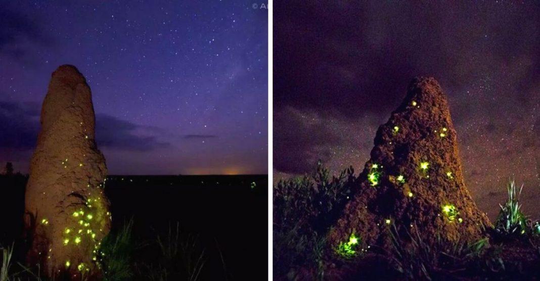 cupinzeiro iluminado vaga-lumes parque das emas