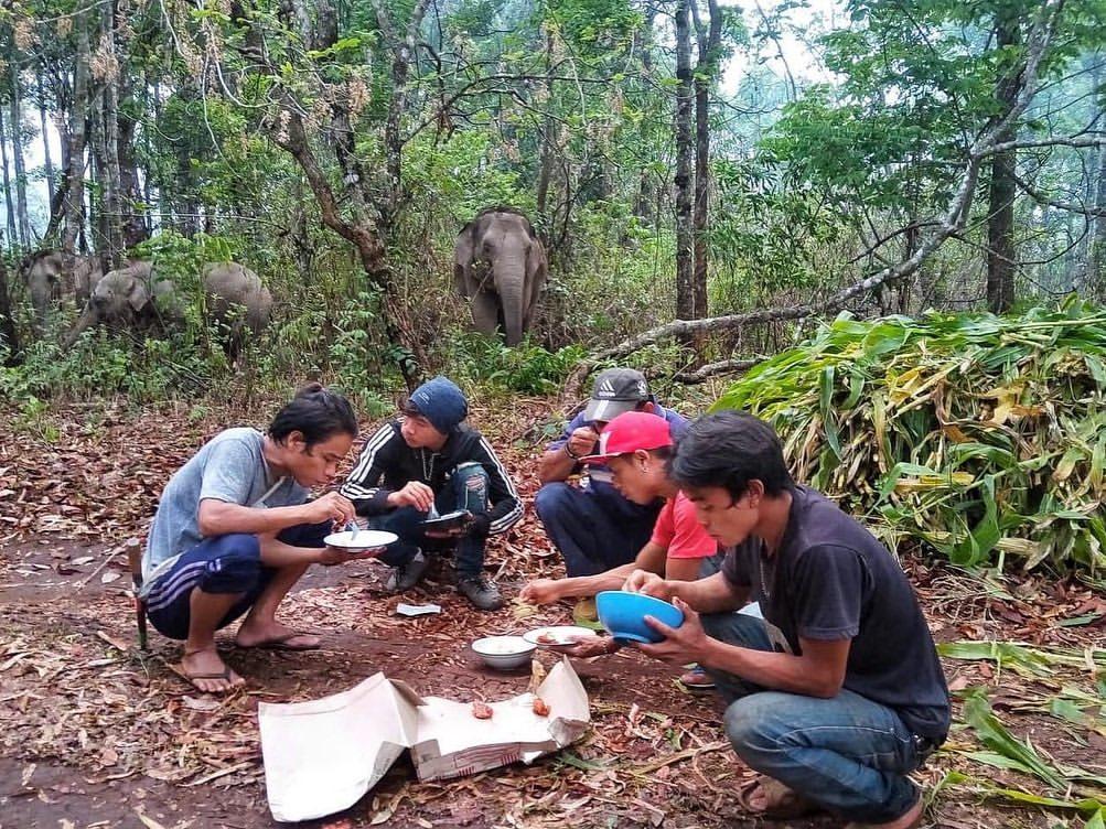 elefantes explorados a vida toda são devolvidos à natureza