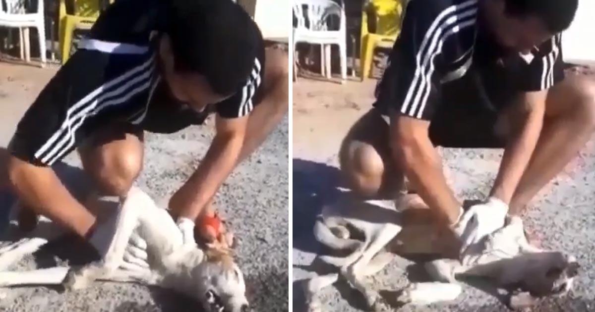 estudante veterinária faz massagem cardíaca cachorro