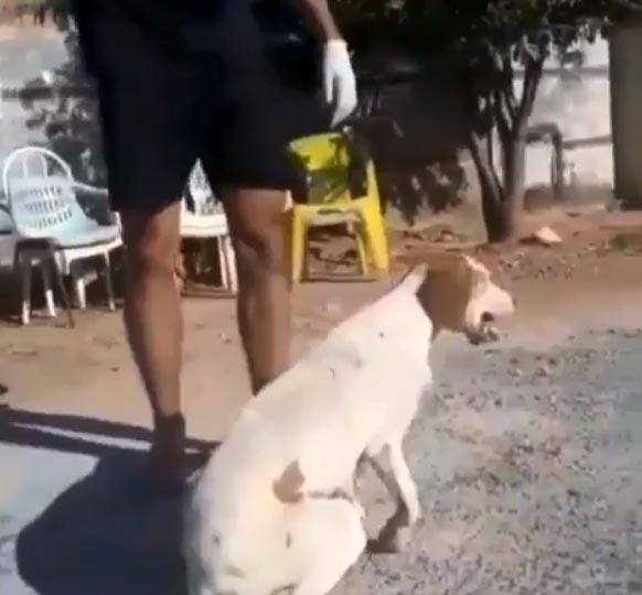cachorro levanta chão após receber massagem cardíaca