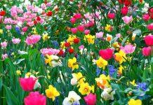 flores podem substituir agrotóxicos lavouras
