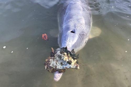 golfinhos-com-saudade-2
