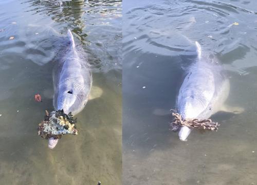 golfinhos-com-saudade-3