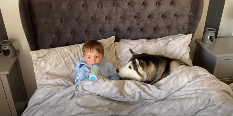 vídeo fofo menino e cachorra husky dormindo juntos