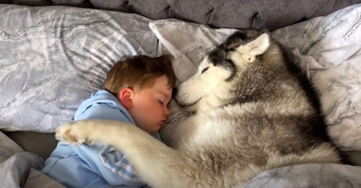 Em vídeo super fofo, bebê e husky são flagrados cochilando juntinhos; assista 1