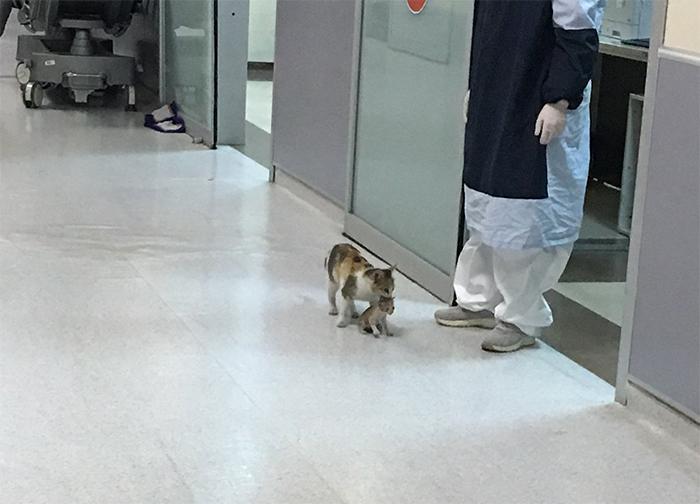 gatinha leva filhote doente hospital