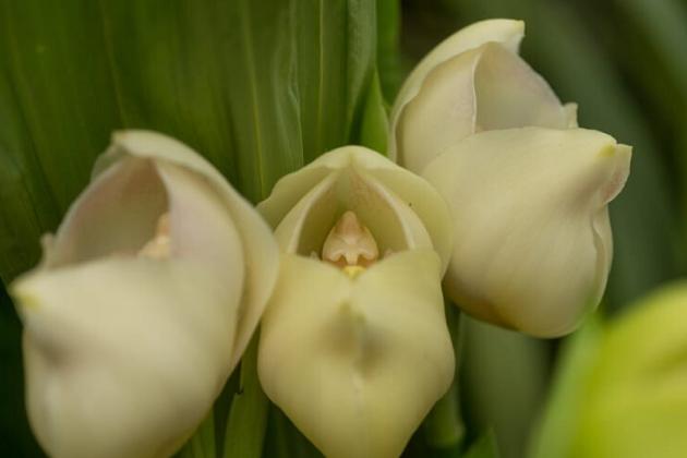 orquídeas bebê pétalas 5