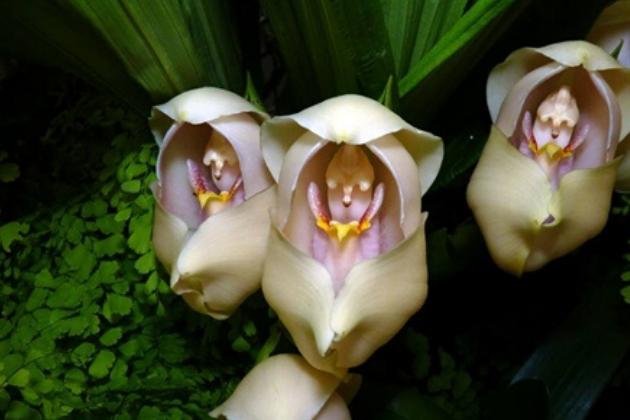 orquídeas bebê pétalas 6