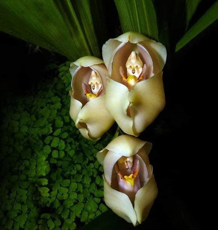orquídeas com bebês 2