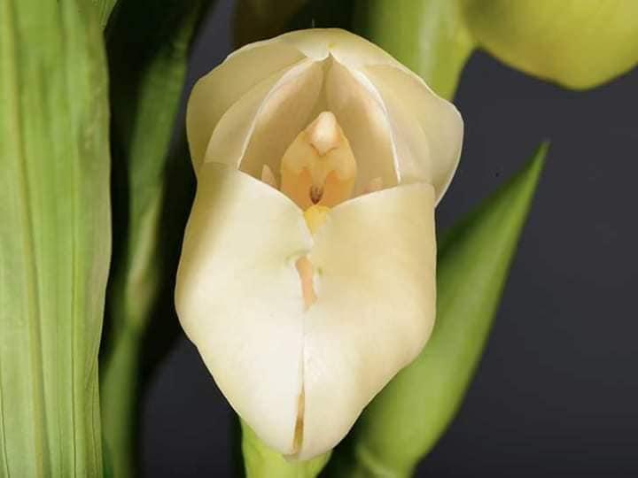 orquídeas com bebês 3
