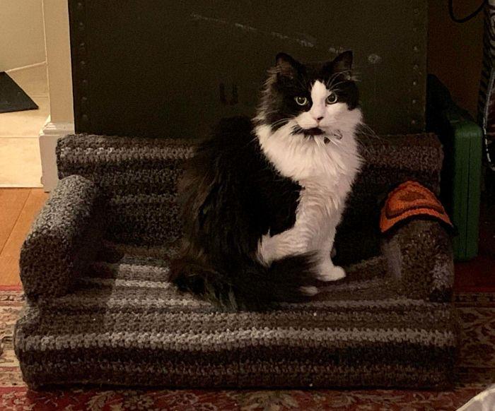 Com tempo de sobra na quarentena, donos estão fazendo sofás de crochê para seus gatinhos 10