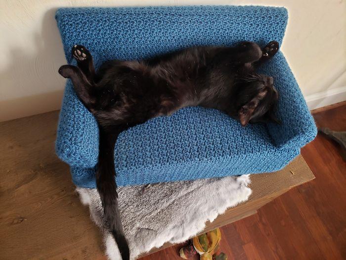 gatinhos ganham sofás de crochê de donos