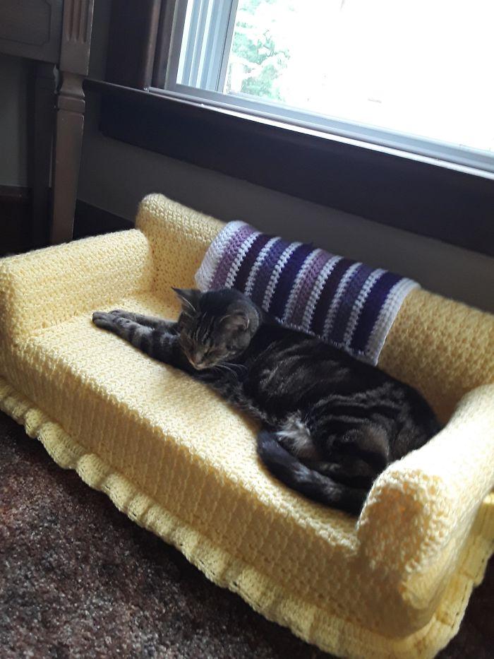 Com tempo de sobra na quarentena, donos estão fazendo sofás de crochê para seus gatinhos 4