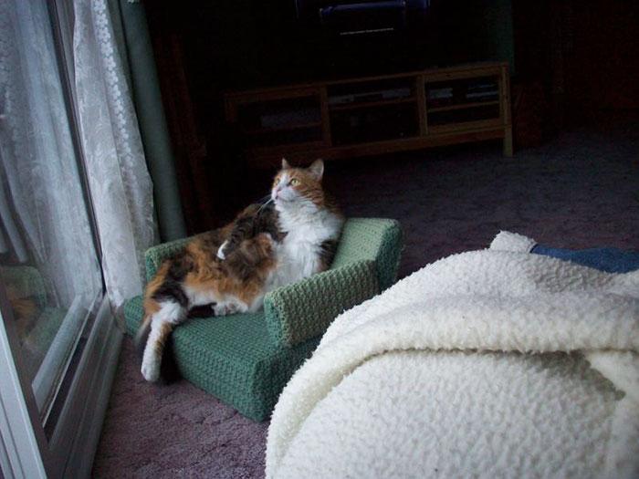 Com tempo de sobra na quarentena, donos estão fazendo sofás de crochê para seus gatinhos 5