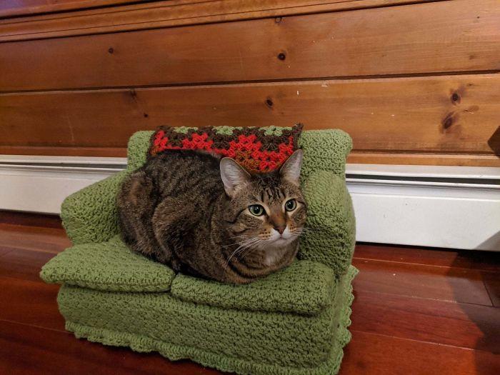 Com tempo de sobra na quarentena, donos estão fazendo sofás de crochê para seus gatinhos 7