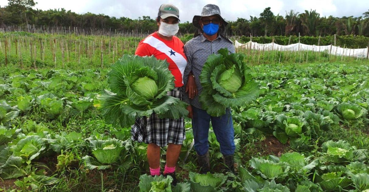 produtor rural doação toneladas repolho famílias carentes pará