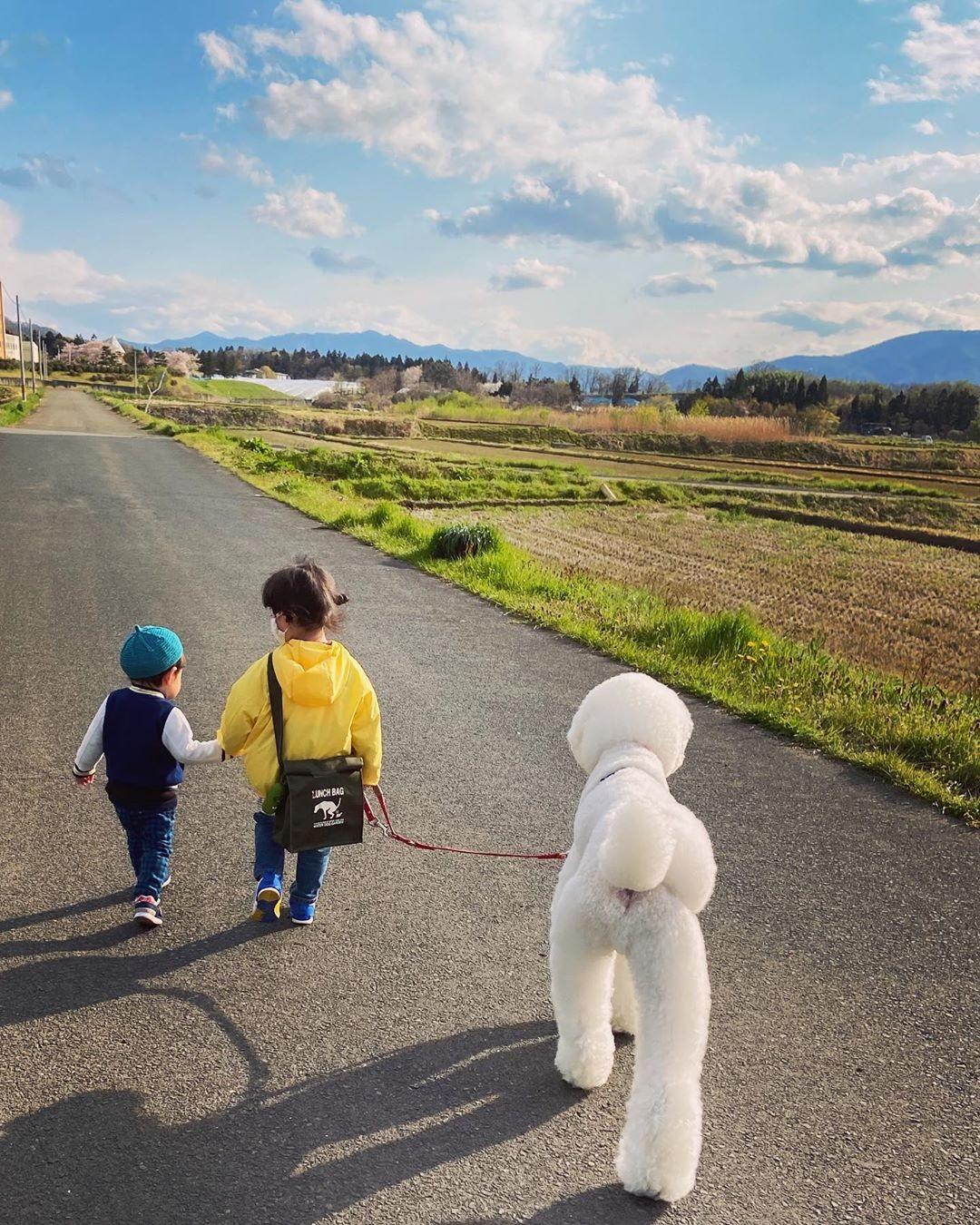 vovó japonesa netos poodles fotos