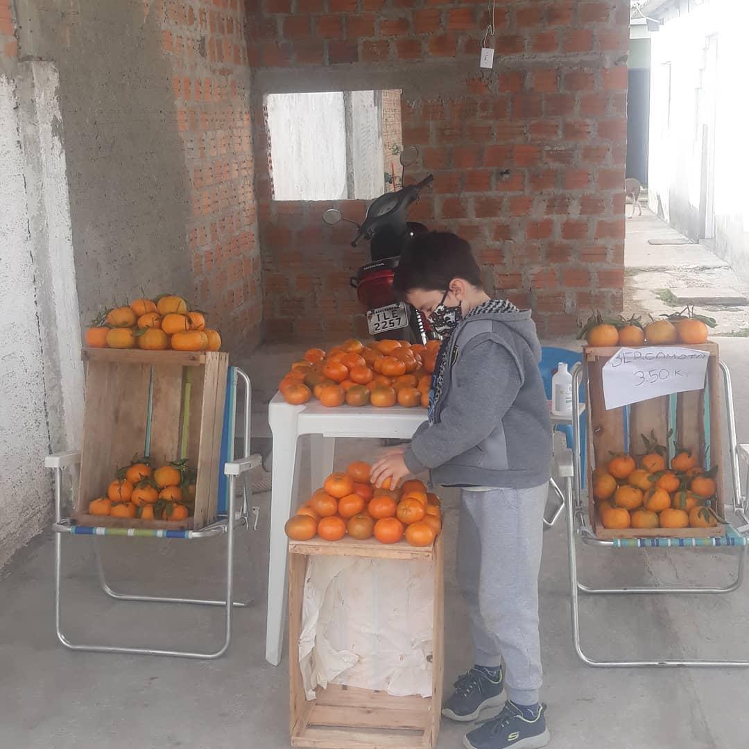 menino coloca tangerinas caixote para vender quintal casa
