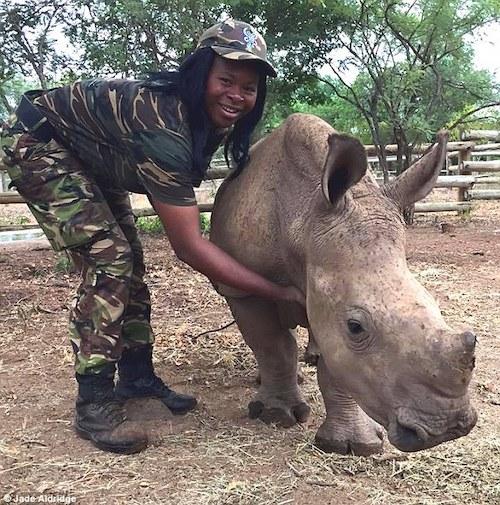 Black-mambas com rinoceronte