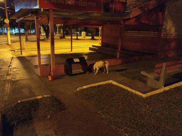 cachorro de rua encontrando sua casinha feita de papelão