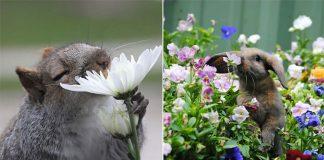 Animais cheirando flores - capa
