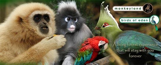Animais Santuário Animal