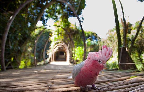 Pássaro do Santuário
