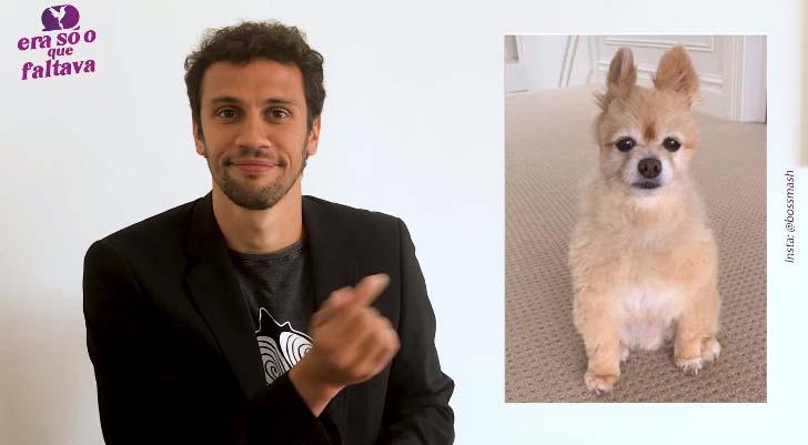 apresentador programa boas notícias razões para acreditar mostra cachorro tozado