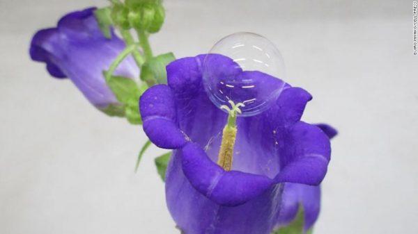 Bolha de sabão em uma flor