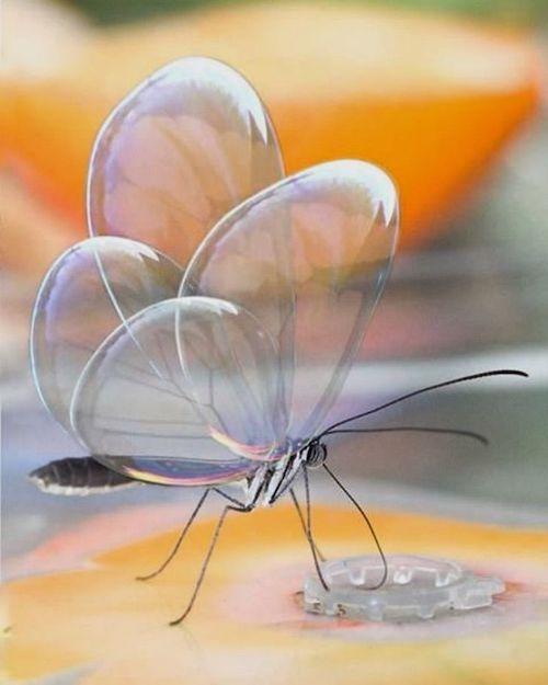 borboleta transparente natureza