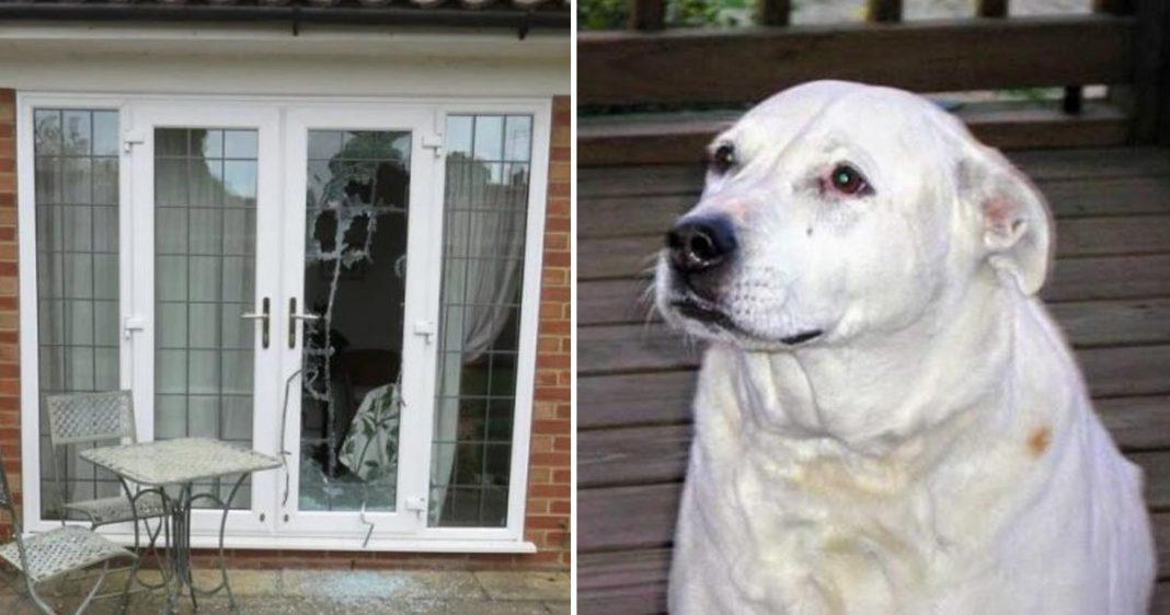 Cachorro Camie e a Porta quebrada