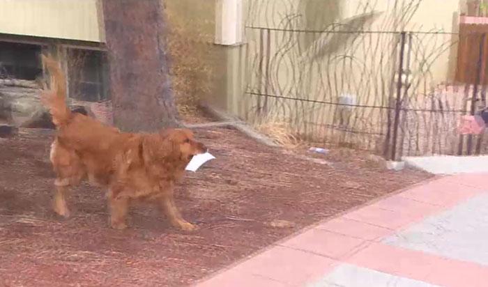 cachorro caminhando calçada lista alimentos vizinha