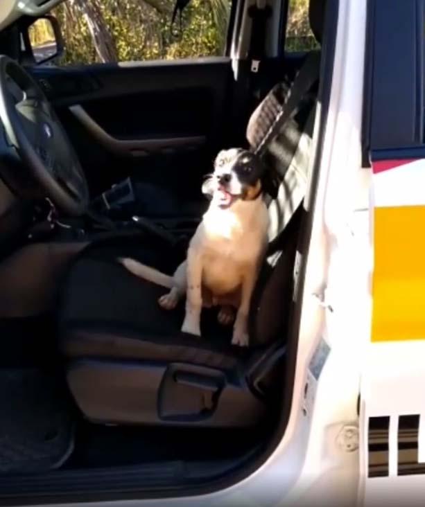 cãozinho sentado banco frente carro viatura polícia rodoviária
