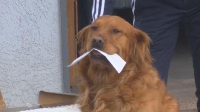 cachorro segurando boca lista alimentos vizinha idosa