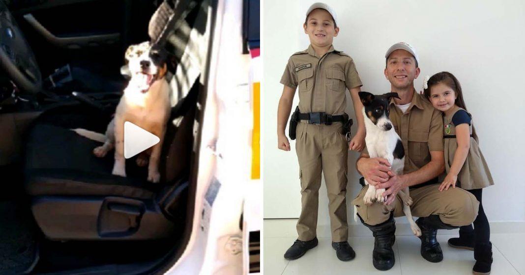 Cãozinho abandonado 'invade' viatura e é adotado por policial rodoviário em SC 2