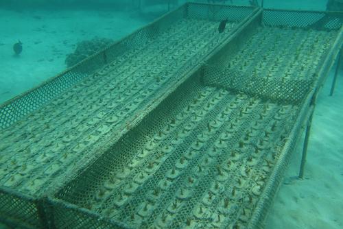 fazenda de esponjas do mar