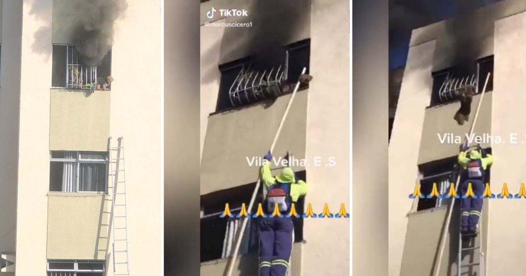 garis resgatam cachorro janela apartamento incêndio
